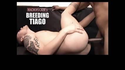 Cezar – Breeding Tiago (Bareback)